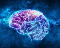 Мозъчни вълни
